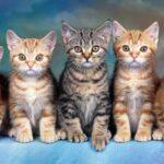 Nằm mơ thấy mèo Là điềm LÀNH hay DỮ? Con Số May Mắn Liên Quan?