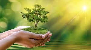 Mơ thấy cây