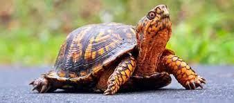 nằm mơ thấy con rùa