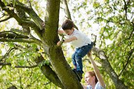 Mơ thấy trèo cây