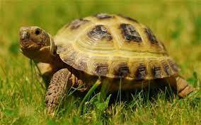 Mơ thấy rùa đánh đề con gì – Giải mã giấc mơ thấy rùa